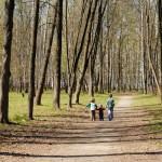 הורים וילדים כמשל העץ