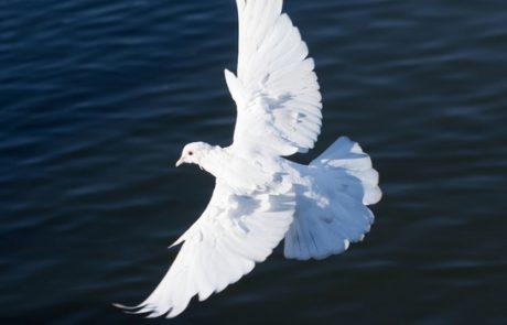 בית של שלום